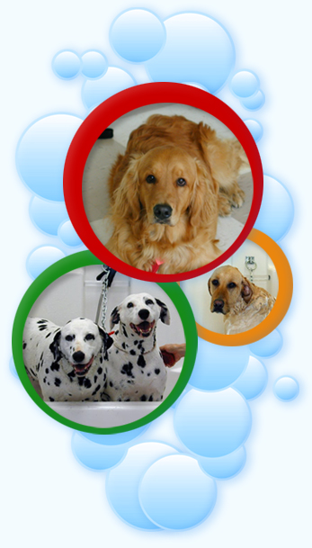The doggie spa faqs how is the doggie spa different from other dog grooming facilities solutioingenieria Image collections